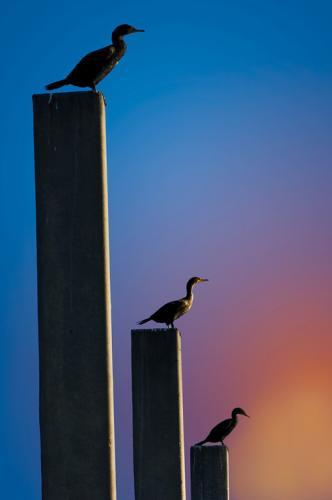Seabird-sunset-XL